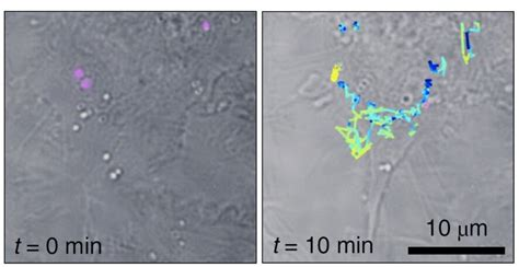 Raman holography tracks nanoparticles in live cells - 2020