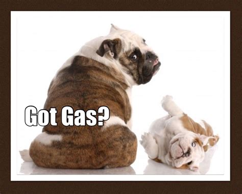 Does Your Dog Have Gas? Tips To Give Your Dog Fast Relief