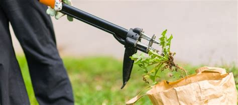 10 Best Weeding Tools For Lawns & Gardens