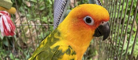 4 Lovebirds for Sale in Singapore | Sg