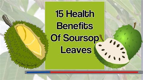 15 Health Benefits Of Soursop Leaves Backstreet Gluttons