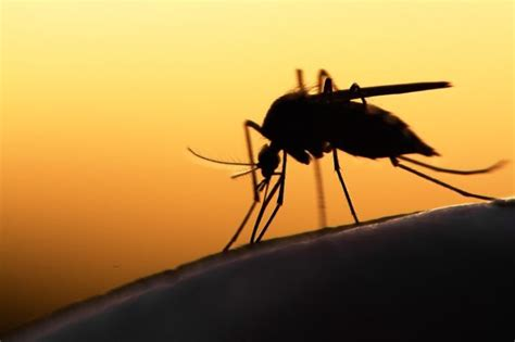 New report finds mosquito fogging chemical could be
