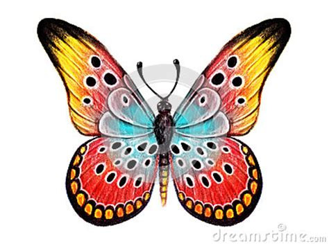Hand Drawn Butterfly On White Background Royalty Free