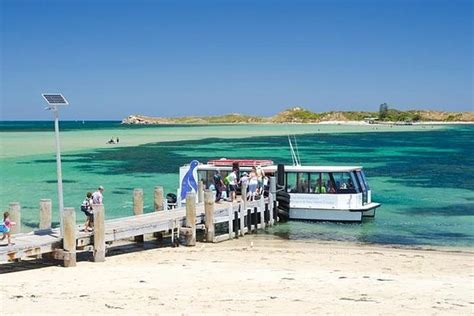 Penguin Island and Caversham Wildlife Park Day Trip From