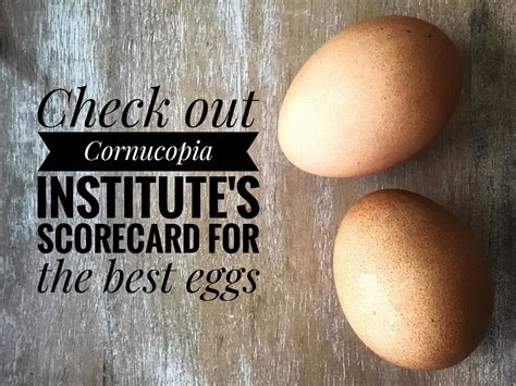 What are the Best Organic Eggs to Buy? - Adina Mayo
