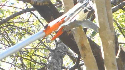 How to cut a tree branch without a ladder for $37