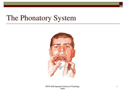 PPT - The Phonatory System PowerPoint Presentation, free