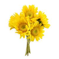 Download Sunflowers Free PNG photo images and clipart
