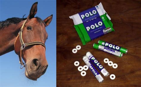 Artificial sweeteners in Polo mints: cancer risk or cancer