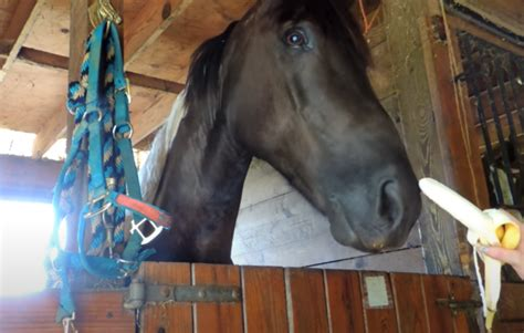 Can Horses Eat Bananas? The Dos and Don'ts - Equineigh