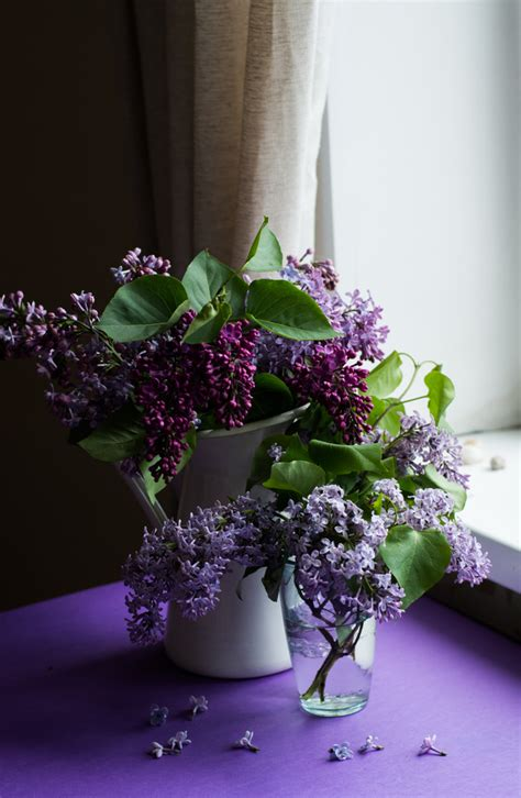 Violet flowers decoration in room Stock Photo - Flowers