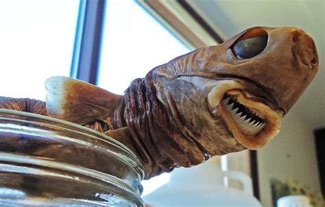 8 Weirdest Sharks In The Universe Make Perfect Viewing If